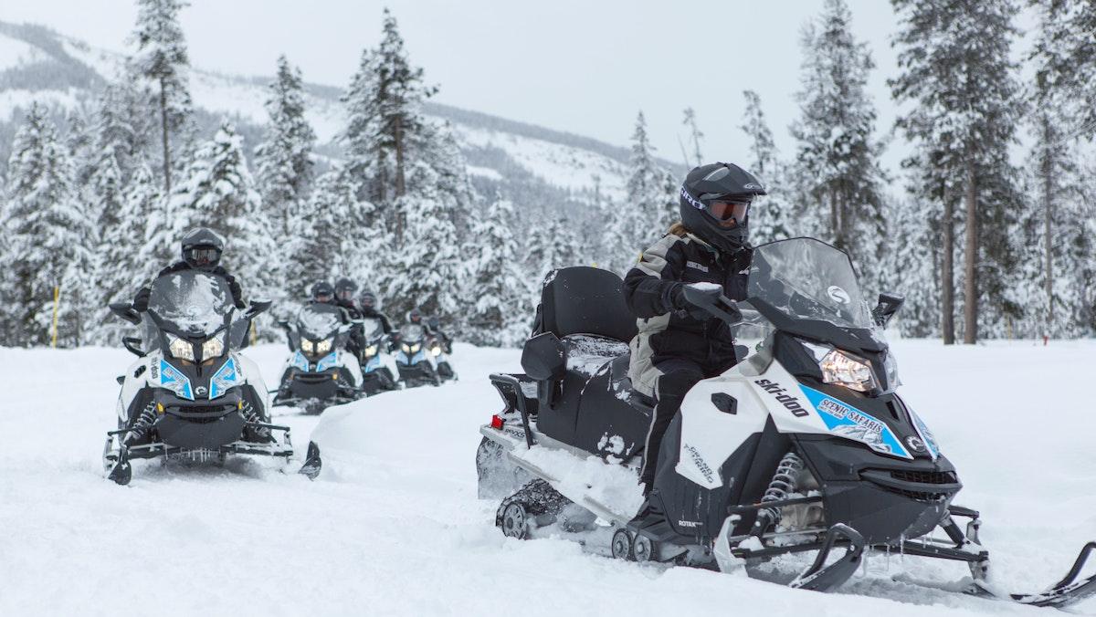 Scenic Safaris Yellowstone Winter 24