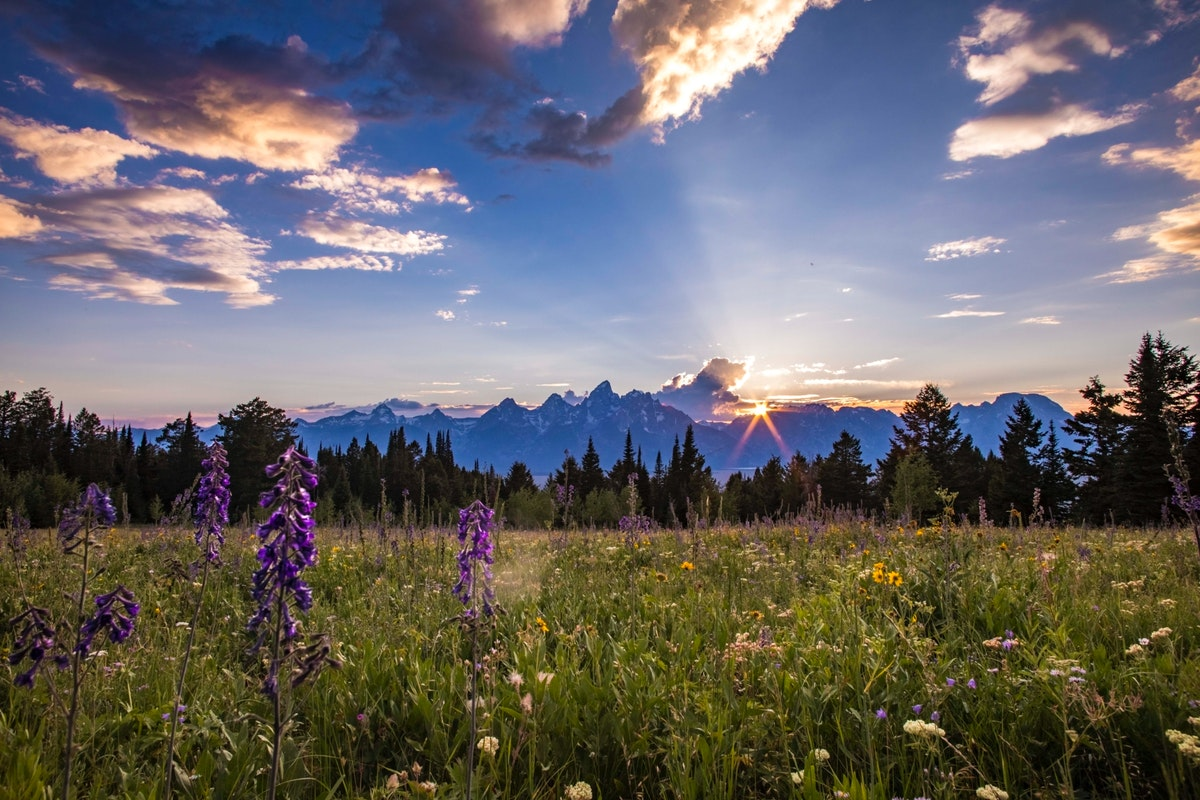 Sunrise in Grand Tetons with lavender fields