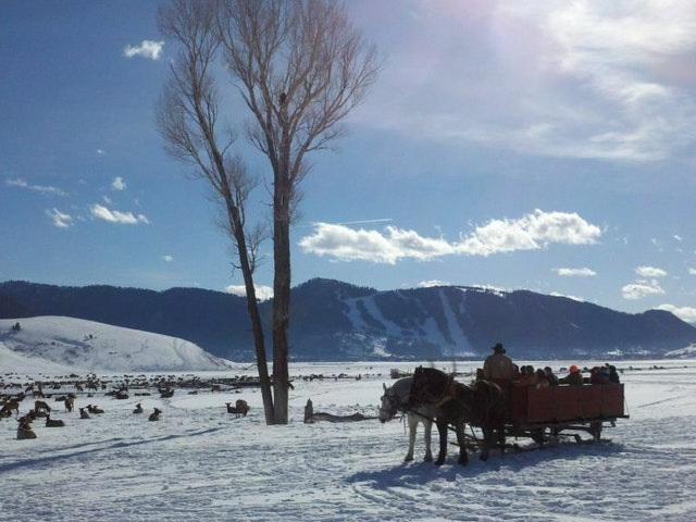 Sunny Sleigh Ride  Large